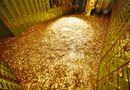 Tin tức - Giá vàng hôm nay 14/11/2018: Vàng SJC tiếp tục giảm thêm 10.000 đồng/lượng