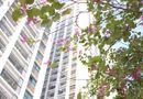 Kinh doanh - Giải pháp nào cho những tranh chấp hiện nay tại các chung cư?