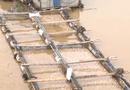 Tin tức - Đồng Nai: Vừa nhận tiền hỗ trợ, người dân dọc sông La Ngà lại nhận tin cá chết trắng bè
