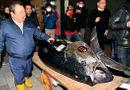 """Tin tức - Đại gia """"bạo tay"""" chi 3,1 triệu USD mua 278 kg cá ngừ, phá vỡ kỷ lục đấu giá tồn tại 6 năm"""