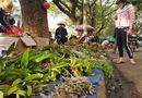 """Tin tức - Chợ lan rừng nhộn nhịp """"đón Tết"""", người dân đổ xô tận diệt loài hoa quý"""