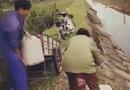 Tin tức - Phát hiện vợ chồng trưởng thôn liên tiếp đổ chất thải bẩn xuống kênh tưới tiêu