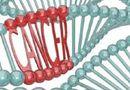 Y tế - Đột phá y học: Biến tế bào ung thư vú thành mỡ