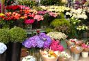 Tư vấn - Mua hoa tươi dịp Tết: Cẩn trọng
