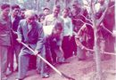 Xã hội - Nhớ Bác Hồ trồng cây năm xưa