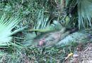 Tin tức - Hà Tĩnh: Người đàn ông  chết trong rừng ngày mùng 3 Tết nghi bị voi quật