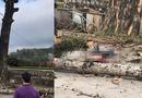Tin tức - Hà Giang: Nam thanh niên tử vong do cành cây gạo rơi trúng đầu