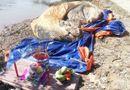 Tin tức - Đi bắt ốc, phát hiện xác cá voi hơn 10 tấn trôi dạt vào vùng biển Bạc Liêu