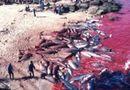 Tin thế giới - Nhật Bản: Hé lộ sự thật cảnh tàn sát cá heo khủng khiếp đang bị lên án mạnh mẽ