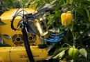 Tin tức - Video: Thích thú trước cảnh robot thu hoạch ớt chín trong nhà kính