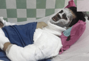 Pháp luật - Vụ Việt kiều bị tạt axit, cắt gân chân: Nạn nhân có thể ăn uống, trò chuyện