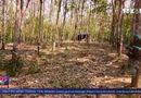 Xã hội - Kẻ gian liên tiếp hủy hoại tài sản của người tố cáo phá rừng