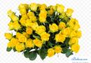 Cần biết - Đại chiến hoa hồng trong tiệm hoa xinh đẹp