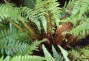 Sức khoẻ - Làm đẹp - Hàng ngàn người bệnh đã giảm tiểu đêm giúp khỏe thận, phòng ngừa suy thận nhờ loại cây này!