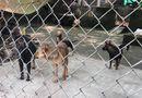 Tin trong nước - Đàn chó cắn chết bé trai 7 tuổi ở Hưng Yên bị công an bắt giữ