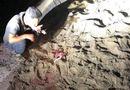 Tin trong nước - Vụ bé trai bị đàn chó cắn chết ở Hưng Yên: Công an vào cuộc điều tra