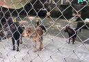 Tin trong nước - Vụ đàn chó cắn tử vong bé trai 7 tuổi: Cục Thú y lên tiếng
