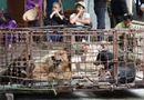 Tin trong nước - Đàn chó cắn chết bé trai 7 tuổi ở Hưng Yên được chuyển về trụ sở công an