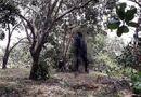 Tin trong nước - Tá hỏa phát hiện xác người đàn ông phân hủy nặng trong tư thế treo cổ ở vườn điều