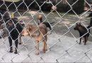 Xã hội - Chó cắn chết người: Báo động ý thức chấp hành và thực thi pháp luật
