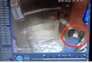 Tin trong nước - Người dân ký đơn tập thể đề nghị khởi tố nguyên Viện phó VKSND Đà Nẵng sàm sỡ bé gái