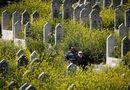 Tin thế giới - Syria: Xót xa hình ảnh hoa cỏ nở rộ trong các thành phố bị chiến tranh tàn phá