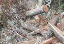 Pháp luật - Bắt tạm giam các đối tượng phá rừng tại Vườn quốc gia Phong Nha - Kẻ Bàng