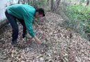 Tin trong nước - Vụ 300 xác thai nhi ở nhà máy rác Cà Mau: Tổ công tác cần thiết sẽ khai quật, kiểm tra
