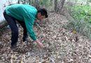 Tin trong nước - Vụ 300 xác thai nhi ở nhà máy rác Cà Mau: Nhà máy từng xin đất làm nghĩa địa thai nhi