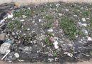 Môi trường - Đà Nẵng: Người dân bức xúc vì cá chết bốc mùi hôi nồng nặc