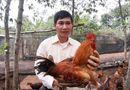 """Gia đình - Tình yêu - """"Vua gà dược liệu"""": Người khuyết tật làm giàu bằng trí tuệ"""