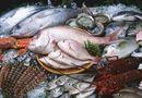 Thực phẩm - Kinh hoàng bảo quản hải sản bằng thuốc Trung Quốc