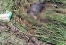 Tin trong nước - Vụ thi thể phân hủy trên đồng lúa ở Nam Định: Đã xác định danh tính
