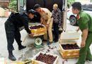 Tin trong nước - Bắt giữ gần 50kg tôm hùm đất nhập lậu tại Lạng Sơn