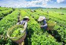 Truyền thông - Thương hiệu - Khởi sắc xây dựng nông thôn mới trên vùng đất Phú Lương