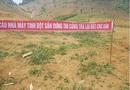Xã hội - UBND tỉnh Sơn La đề nghị kiểm tra dự án Nhà máy bột sắn Thuận Châu (Kỳ 2)