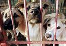 Tin thế giới - Khu chợ lớn chuyên bán thịt chó tại Hàn Quốc chính thức đóng cửa