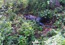 Tin trong nước - Thanh Hoá: Ngửi thấy mùi hôi nồng nặc trong công viên, phát hiện thi thể đang phân hủy