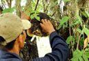Tin trong nước - Hà Tĩnh: Vào rừng lấy mật ong, người đàn ông tử vong thương tâm
