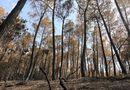 Tin trong nước - Vì sao chưa huy động trực thăng chữa cháy rừng nghiêm trọng ở Hà Tĩnh?