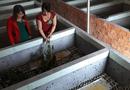 Đời sống - Nuôi loài chết sớm trong hố xi măng, gái má hồng thu 15 triệu/tháng