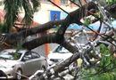 Tin trong nước - Gió mạnh nhổ cây to bật gốc, đè bẹp ô tô ở TP. HCM