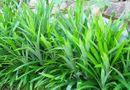 Sức khoẻ - Làm đẹp - Các loại lá cây chữa bệnh tiểu đường hiệu quả