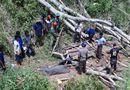 Tin trong nước - Bình Định: Vào rừng chặt cây, nam thanh niên bị gỗ đè tử vong