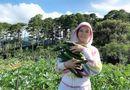 Chuyện làng sao - Lý Nhã Kỳ mua 50 hecta đất đồi Đà Lạt để trồng rau, nuôi gà, trải nghiệm cuộc sống mới