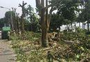 Tin trong nước - Hà Nội chuyển 100 cây hoa sữa lên bãi rác Nam Sơn: Người dân Tây Hồ nói gì?