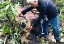 Đời sống - Đồng Nai: Phát hiện bò tót nặng 800kg nằm trong Sách đỏ chết trong rừng