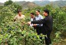 Xã hội - Kinh tế hợp tác trong phát triển nông nghiệp Sơn La, dưới góc nhìn nghiên cứu