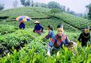 Xã hội - Tăng cường năng lực lao động nông thôn phục vụ khởi nghiệp nông nghiệp công nghệ cao, tham gia chuỗi giá trị nông sản toàn cầu (Phần III)
