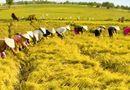 Xã hội - Tăng cường năng lực lao động nông thôn phục vụ khởi nghiệp nông nghiệp công nghệ cao, tham gia chuỗi giá trị nông sản toàn cầu (Phần I)